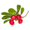ingredients bearberry